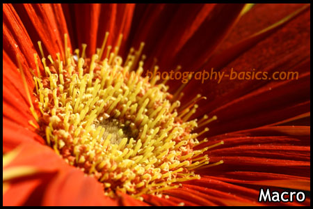 Macro Photography - Flower